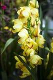 Orchideenblüte Lizenzfreies Stockbild