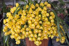Orchideenblüte Stockfotos