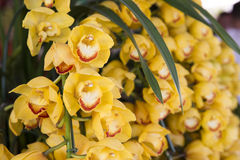 Orchideenblüte Stockbild
