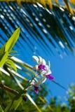 Orchideenblume Lizenzfreies Stockbild