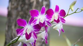 Orchideenblume Lizenzfreie Stockfotografie
