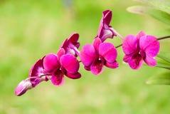 Orchideenblume Stockbilder