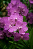 Orchideenblume Stockfotos