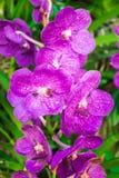 Orchideenblume Stockbild