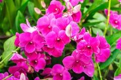 Orchideenblume Lizenzfreies Stockfoto