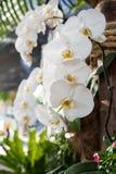 Orchideenblume im Garten stockfotos