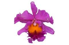 Orchideenblume lokalisiert Lizenzfreie Stockfotos