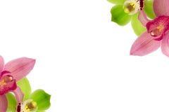 Orchideenblume lokalisiert auf weißer Hintergrundschönheit Stockfoto