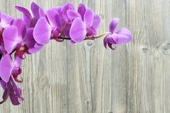 Orchideenblumen Stockfoto