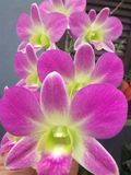 Orchideenblumen Stockbild