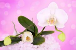 Orchideenblumen auf einem rosa Hintergrund Stockbilder