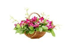 Orchideenblumen im Korb Stockbilder
