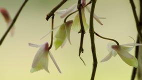 Orchideenblumen und -insekten stock video