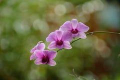 Orchideenblumen, Unschärfehintergrund Lizenzfreie Stockbilder