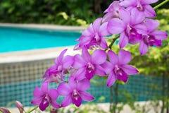 Orchideenblumen von Thailand Stockfoto