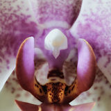Orchideenblumenblüte stockbild
