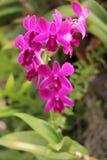 Orchideenblumenblüte Stockfoto
