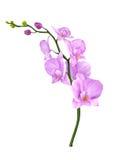 Orchideenblumenillustration Lizenzfreies Stockbild