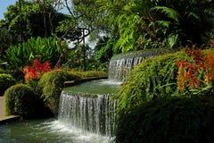 Orchideenbrunnen - botanische Gärten Singapurs Stockbild
