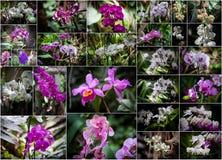 Orchideencollage lizenzfreies stockfoto