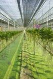 Orchideengarten Stockfotografie
