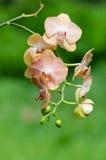 Orchideenhintergrund Stockfotografie