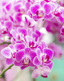 Orchideenmakronahaufnahme im Gesundheitsbadekurort Stockbild