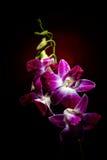 Orchideenniederlassung lizenzfreie stockfotografie