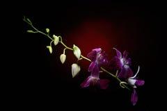 Orchideenniederlassung mit Wassertropfen auf ihr lizenzfreie stockfotos
