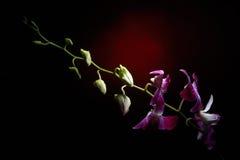 Orchideenniederlassung mit Wassertropfen auf ihr lizenzfreies stockfoto
