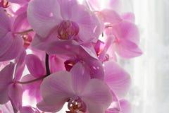 Orchideenraum morgens Lizenzfreie Stockbilder