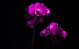 Orchideenstudio Stockbilder