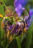 Orchideentraum lizenzfreies stockbild