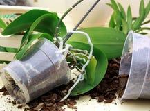 Orchideepflanzen stockfotos