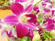 Orchideeroze in tuin Stock Afbeelding