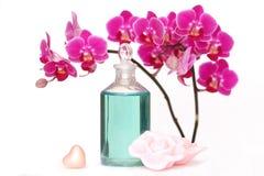Orchideeschönheit Lizenzfreies Stockbild