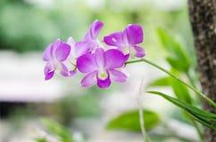 Orchideeschoonheid in Aardseizoen Stock Foto's