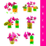 Orchideeset Lizenzfreie Stockfotografie