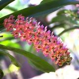 Orchideetuin 03 royalty-vrije stock afbeelding