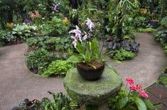 Orchideetuin stock afbeeldingen
