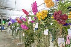 Orchideewedstrijd royalty-vrije stock foto