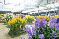 Orchideewedstrijd Royalty-vrije Stock Afbeeldingen