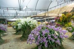 Orchideewedstrijd royalty-vrije stock afbeelding