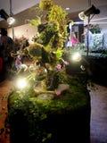 Orchidei facsynaci wystawa kolorowi tropikalni kwiaty w Garching, Niemcy zdjęcie stock