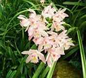 Orchidei grupy menchia kwitnie żółtych punkty po środku drzew zdjęcia royalty free