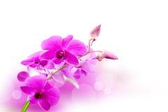 Orchiden blommar bakgrund royaltyfria foton