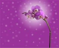 Orchiden blommar förgrena sig på. bakgrund Royaltyfri Fotografi
