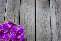 Orchiden på trä stiger ombord bakgrund för brunnsortskönhetsmedelabstrakt begrepp Arkivbilder