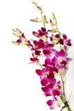 Orchidées Photo stock