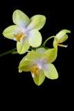 orchidées colorées Photo libre de droits